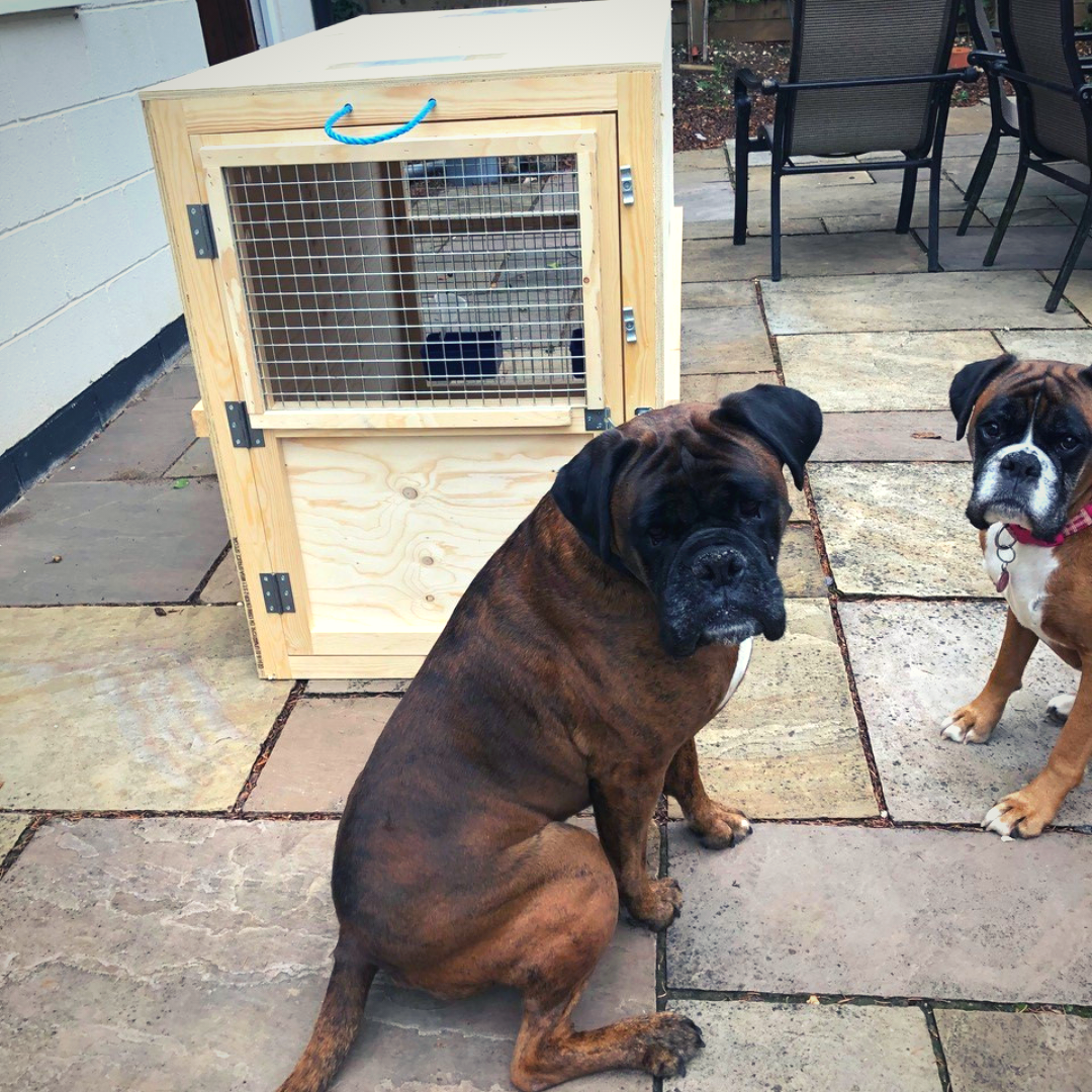 two large dogs with their custom travel crates