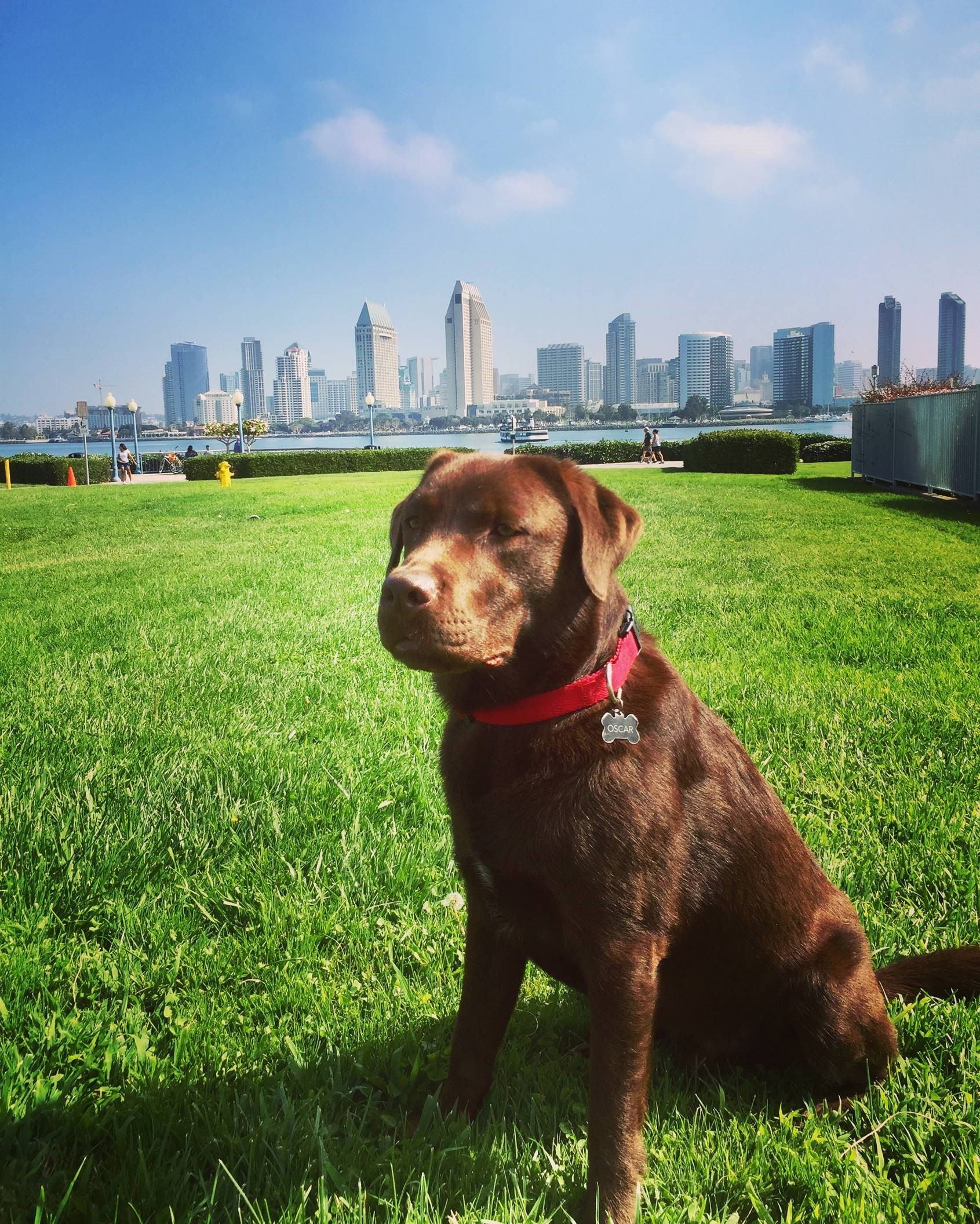 chocolate lab relocates to hong kong