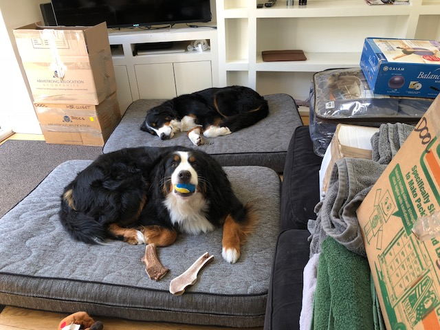 moving large dogs to London