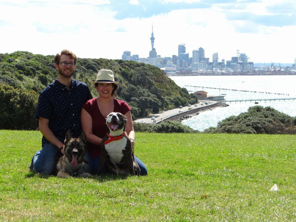 American bulldog and german shepherd shipped to new zealand
