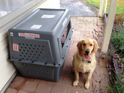Golden Retriever moved to New Zealand