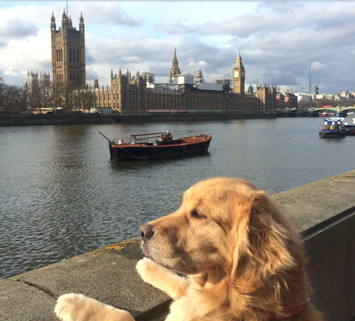 Riley the dog moved to the UK