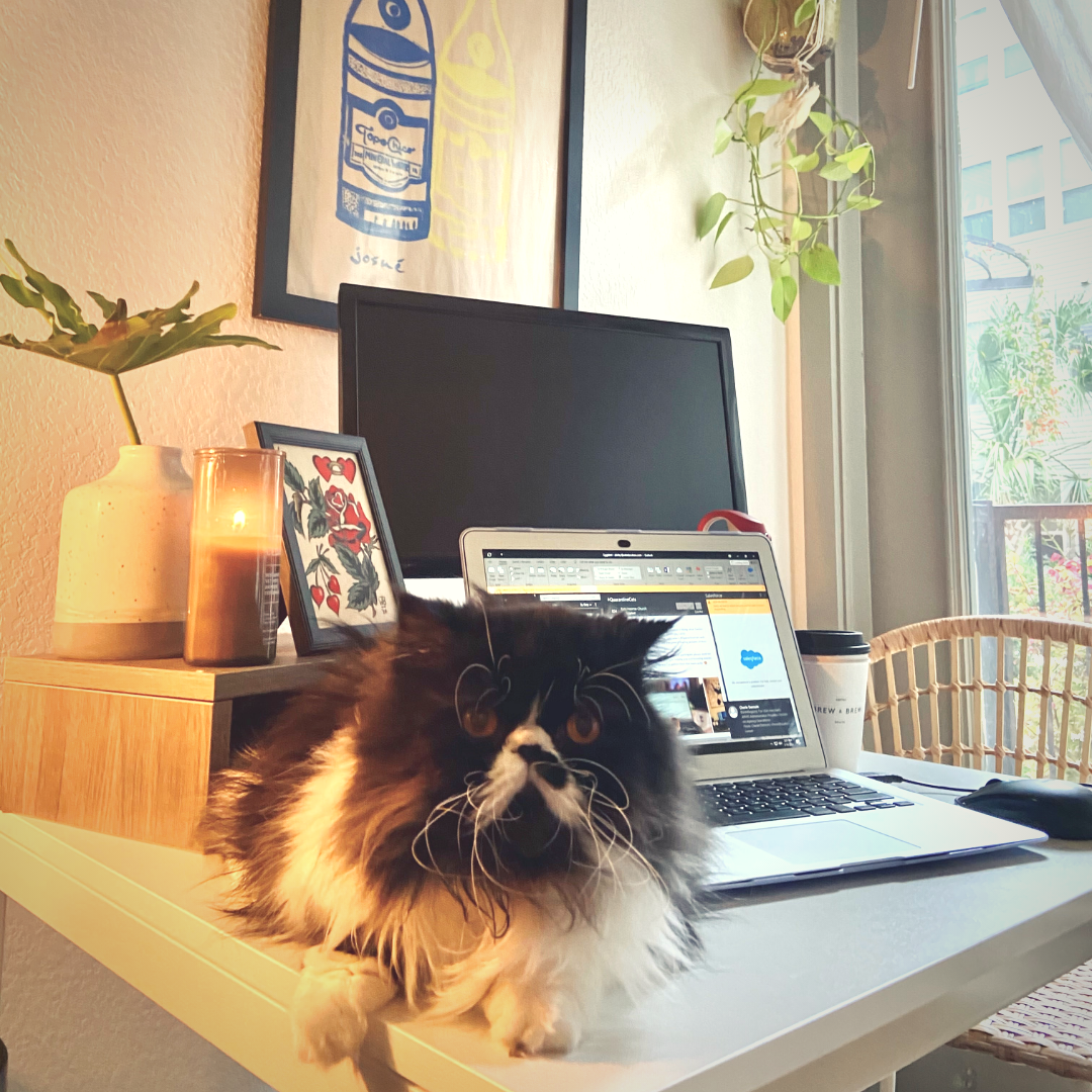 Persian cat, Edgar, helps his owner stay focused while working from home