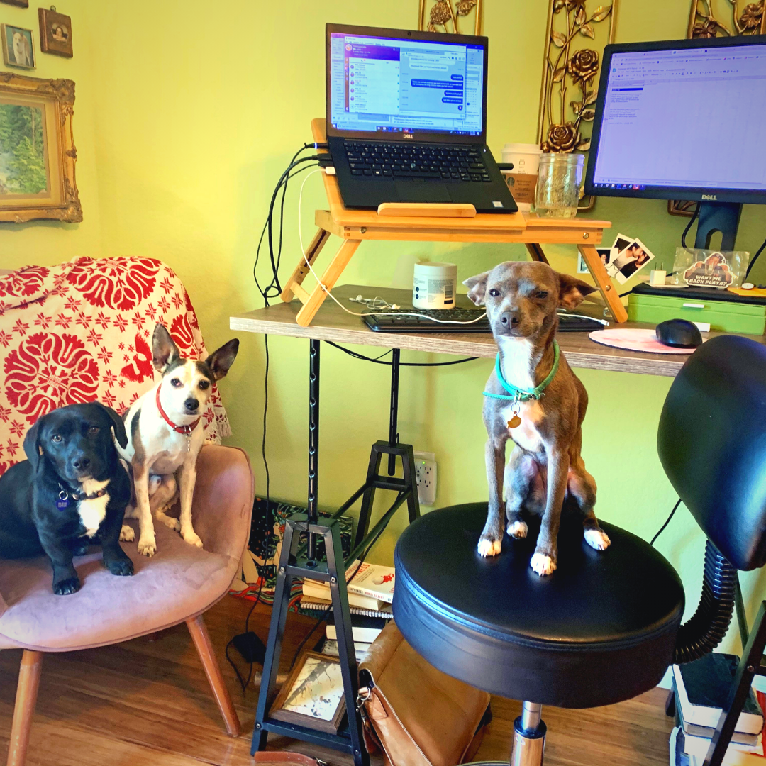 working from home with your pets