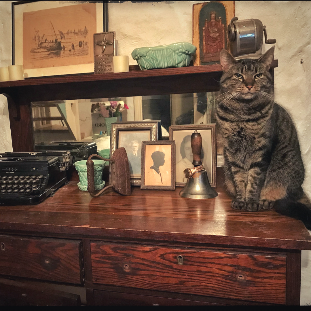 cat at desk in Ireland