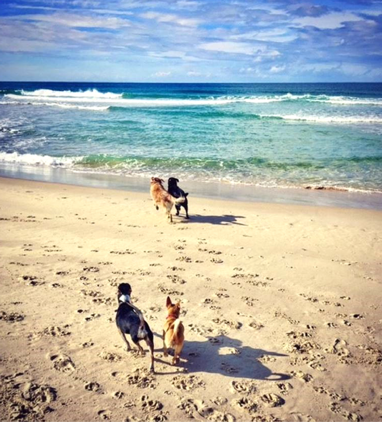 Dogs on the Beach in Australia