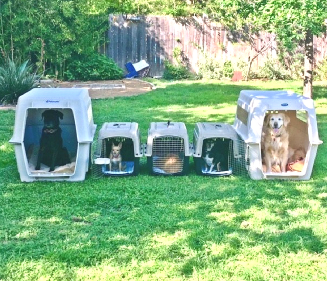 Five pets in travel crates