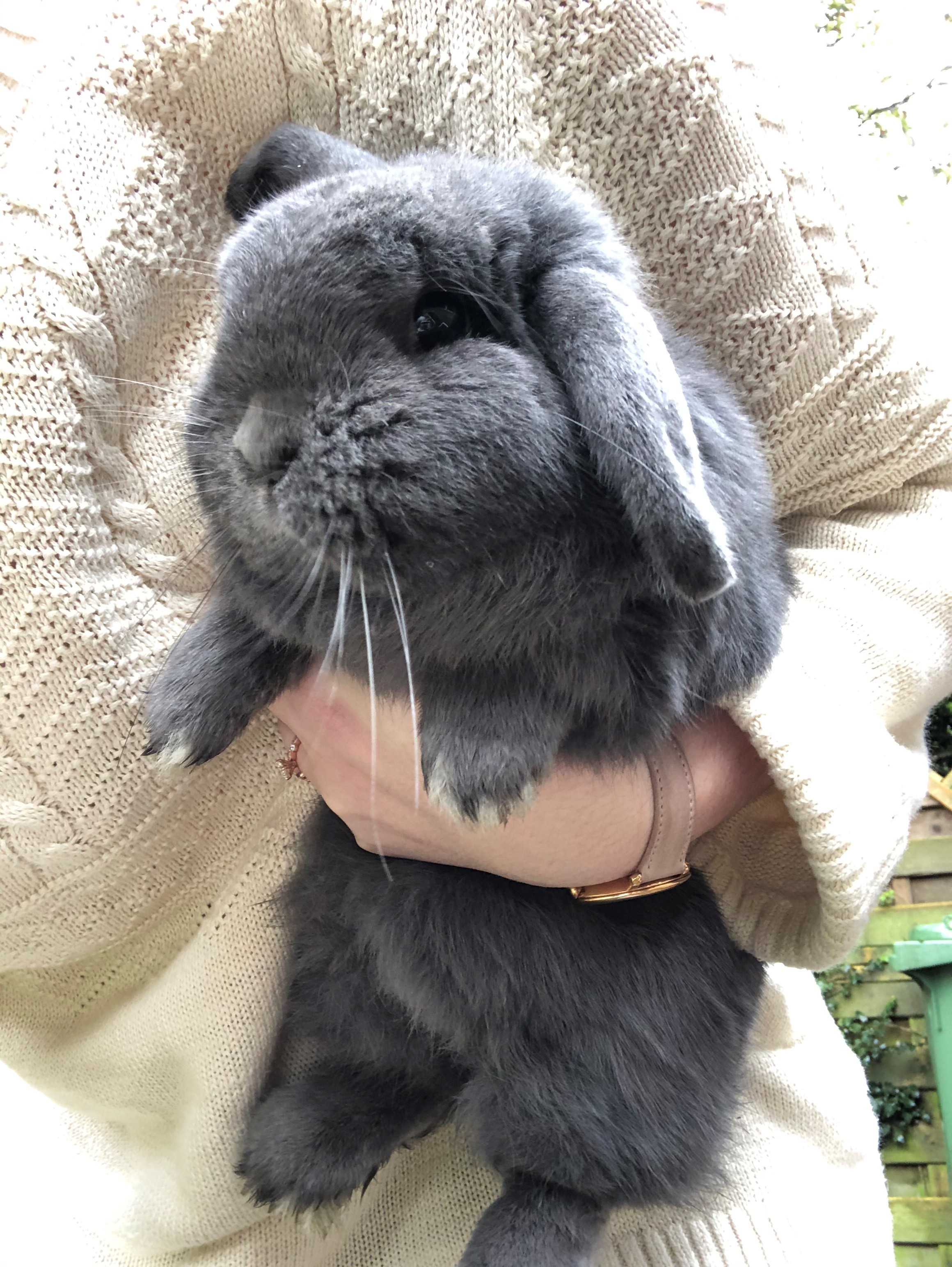 Shipping rabbits to Europe from the US