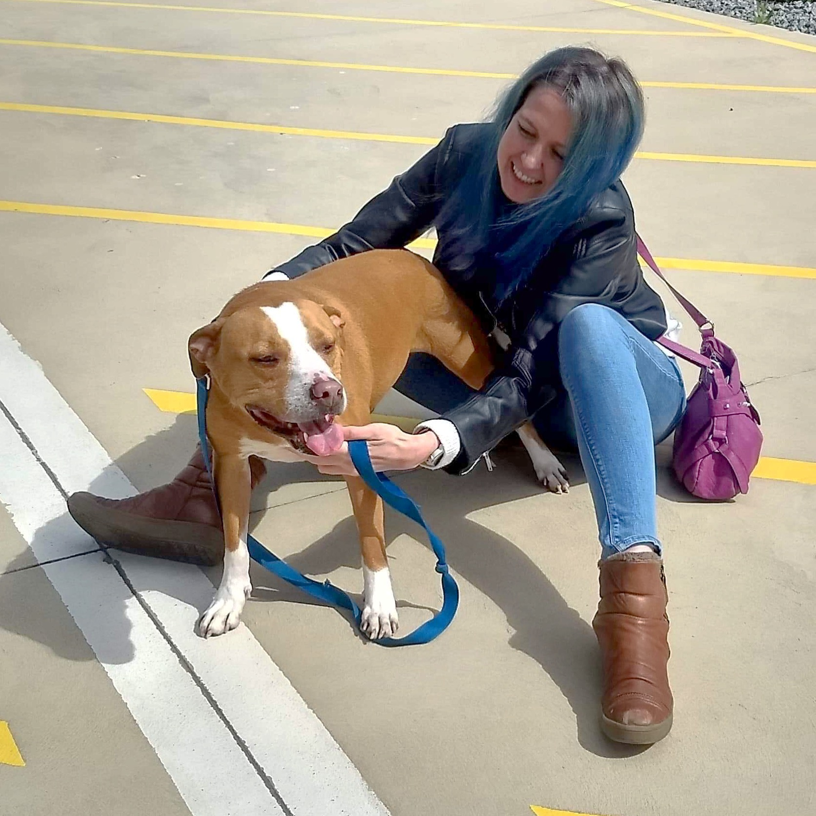 Staffordshire terrier reunited with owner after quarantine in australia