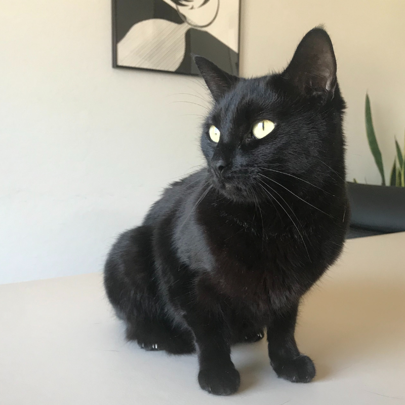 Black cat Maggie flew from the US to the UK