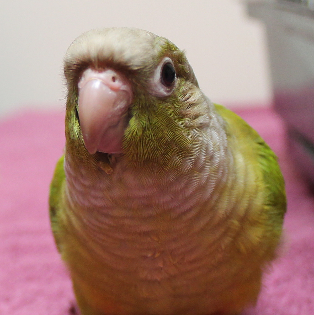 How Do I Bring My Parrot to Europe? | PetRelocation