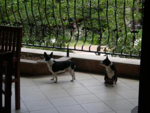 two dogs in china