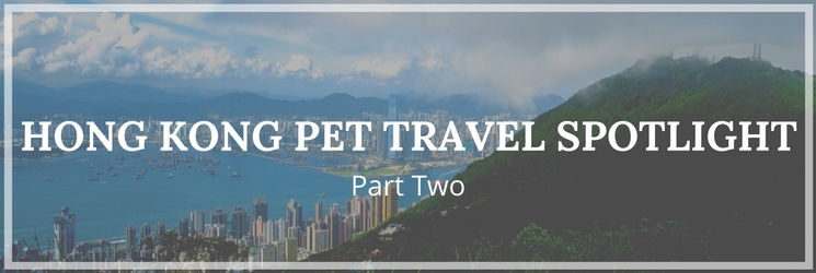 hong kong pet travel spotlight part two