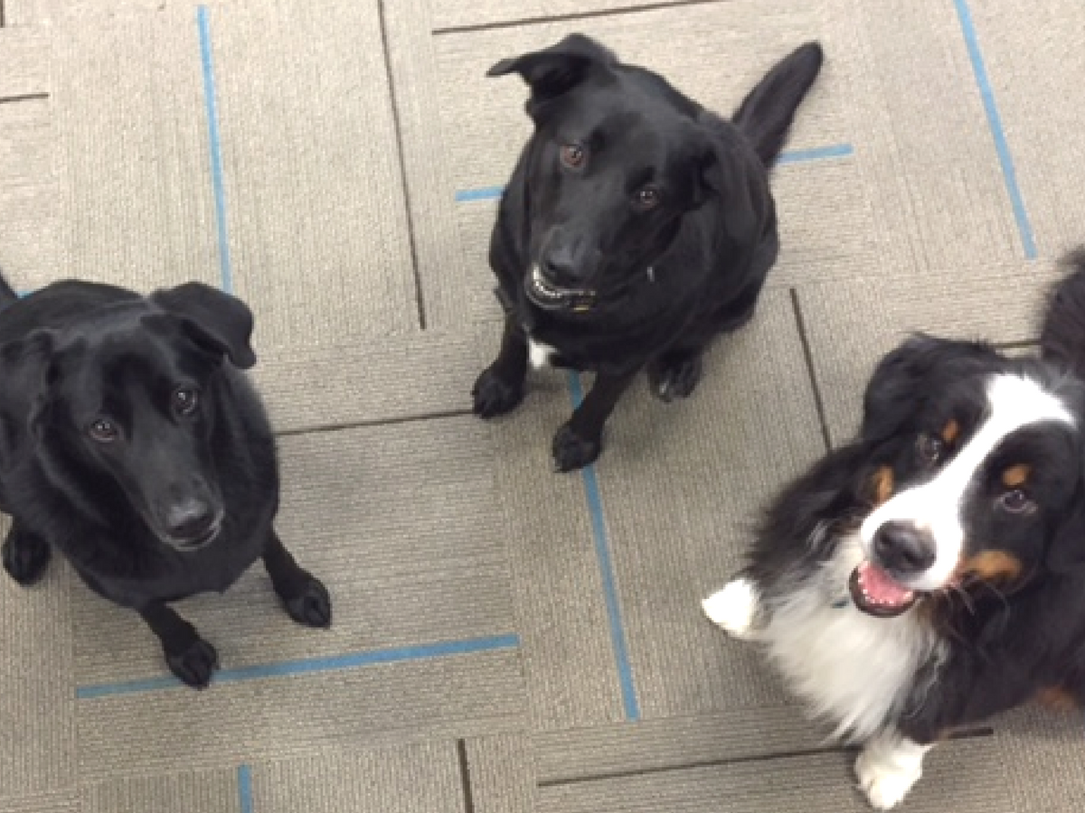 3 dogs at PetRelocation.