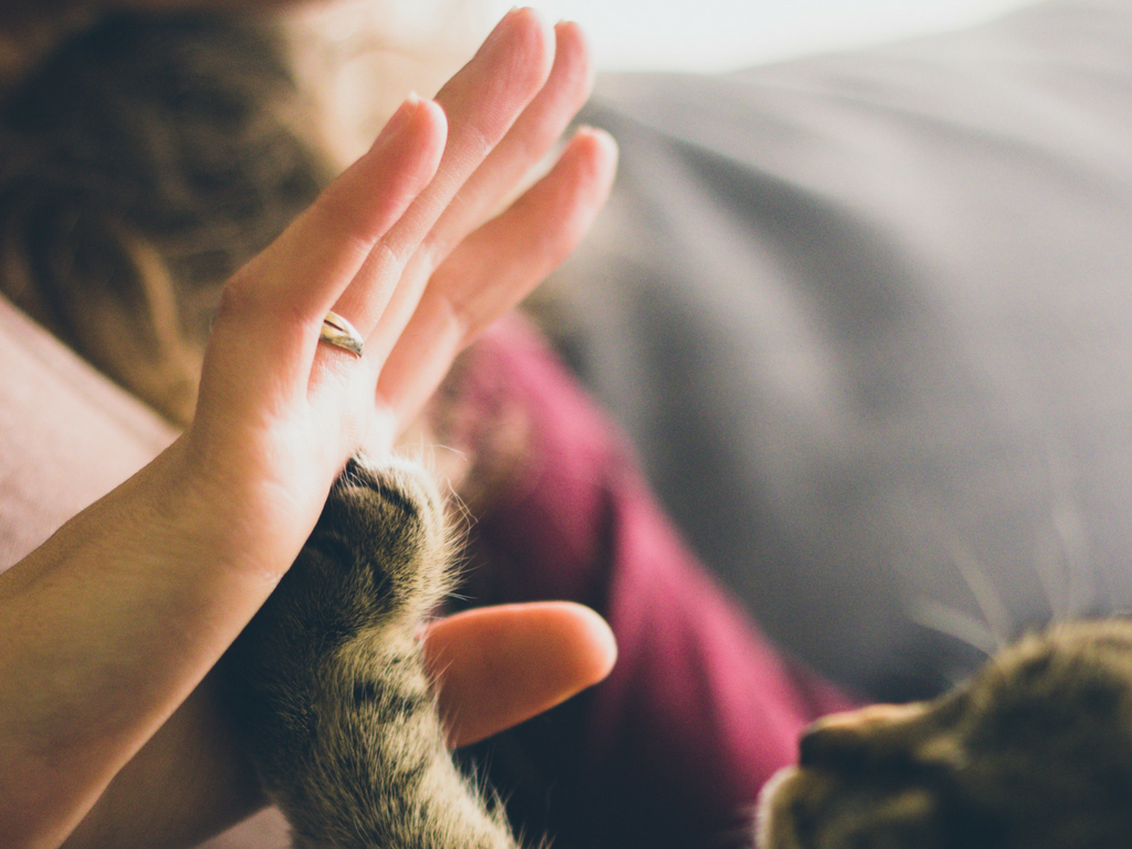 A cat giving a high-five to a lady.