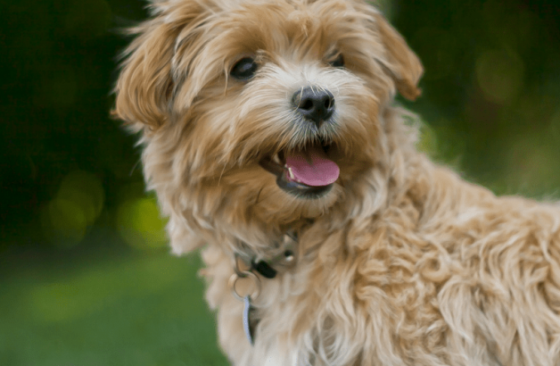 Bringing Dogs and Cats to Malaysia   Malaysia Pet Import and