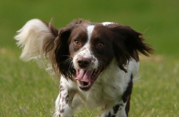 Bringing Dogs and Cats to UK | From Moving to Importing Pets