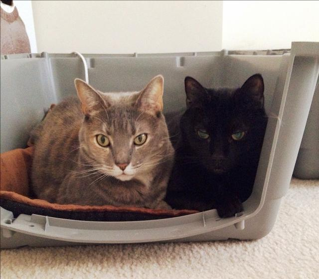 cats in a crate
