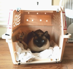 bob the cat in his travel crate