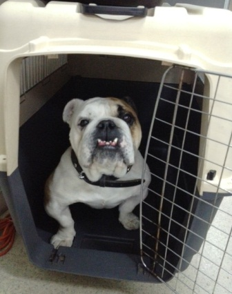 dog in travel crate