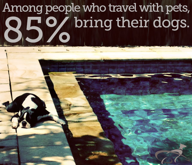 pet travel stats