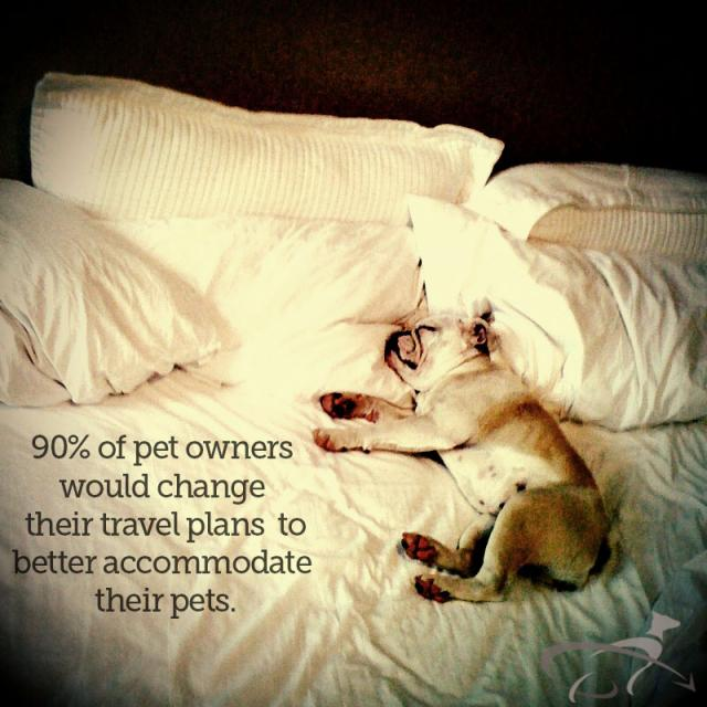 pet travel plans