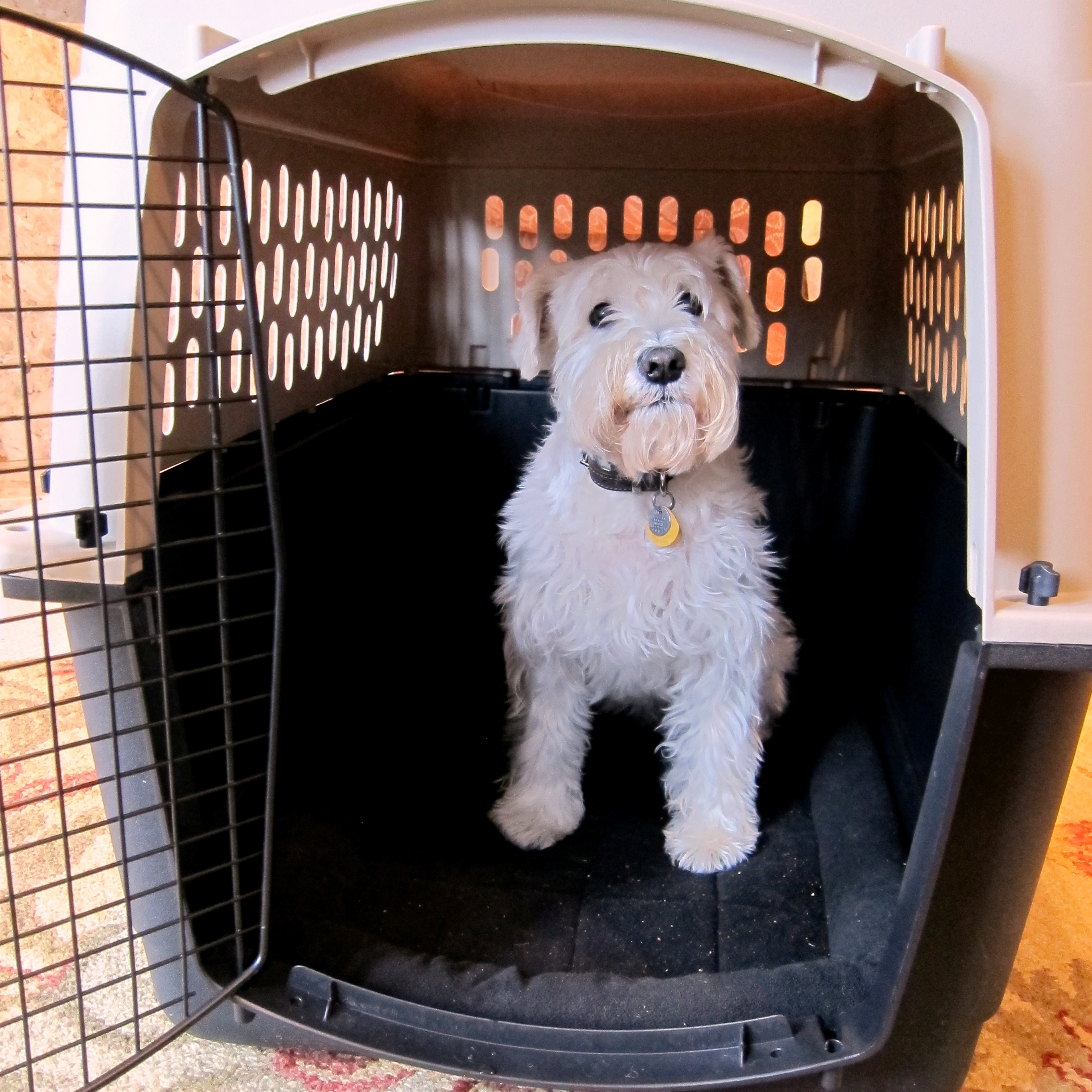chase in his travel crate