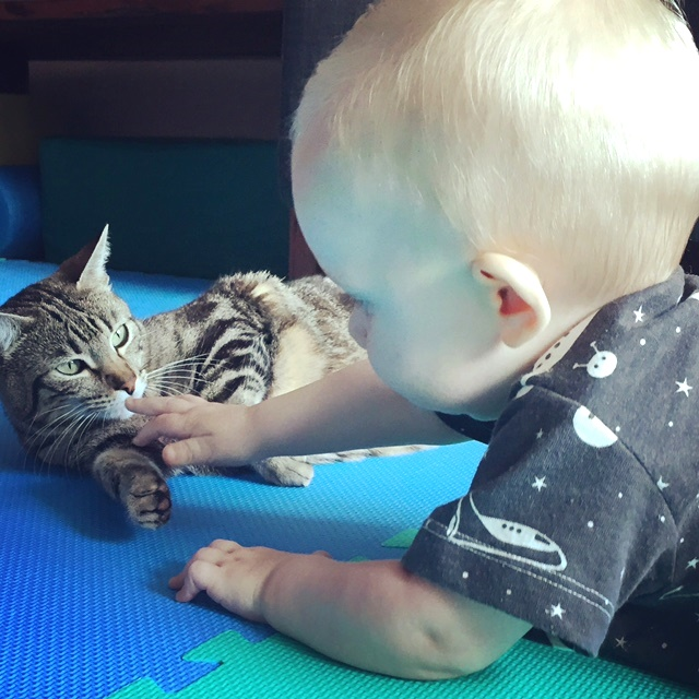 happy pet cat + baby reunion