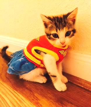 wonder kitty