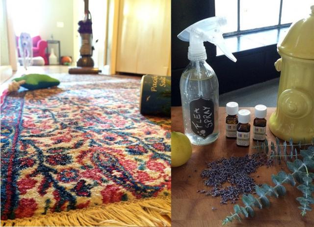After Your Pet's Move: DIY Flea Prevention Tips [Home Depot Guest