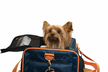 yorkie in a travel bag