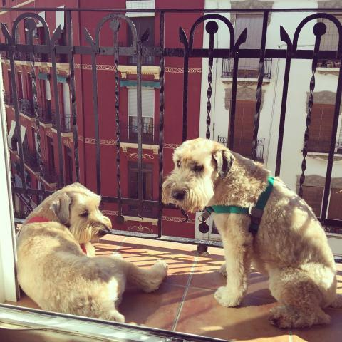 Dog Travel Story: Lilly and Rubys Move to the United Kingdom