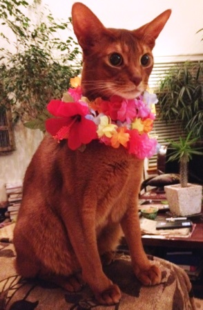 A cat wearing a Lei