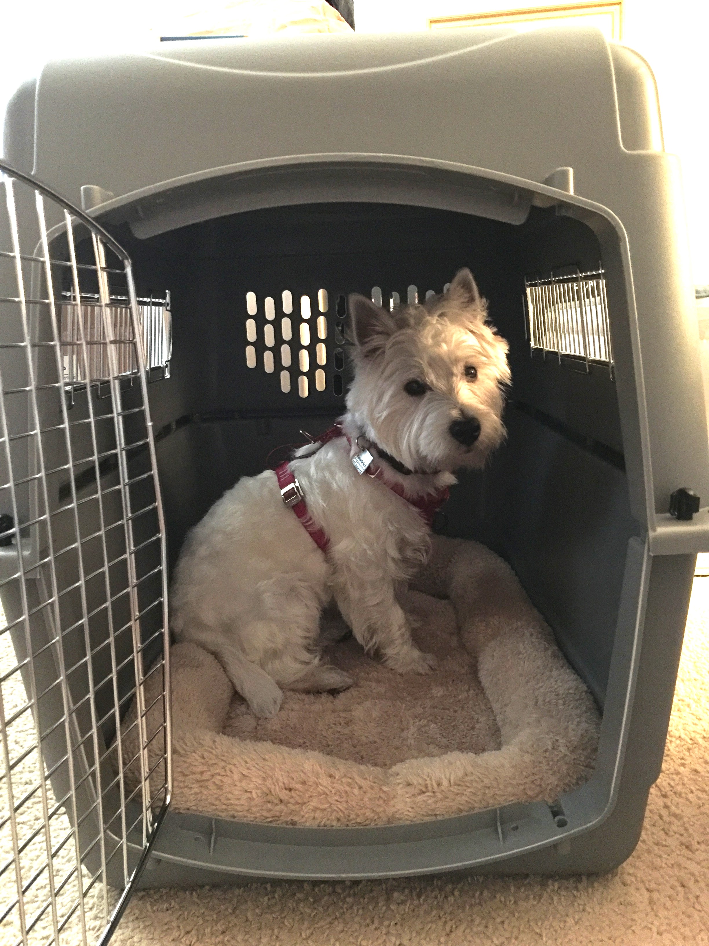 Maverick in travel crate