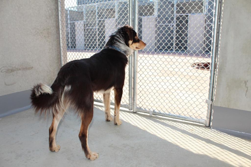 Import Dog From China To Australia