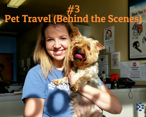 pet travel behind the scenes