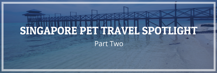 singapore pet travel spotlight part two