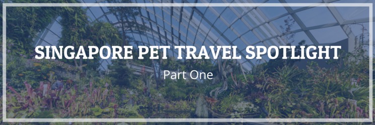 singapore pet travel spotlight part one