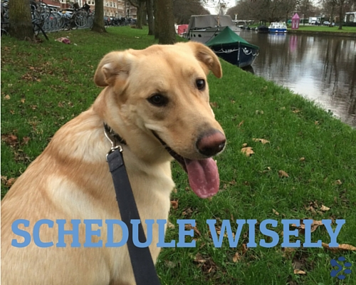 dog: schedule wisely